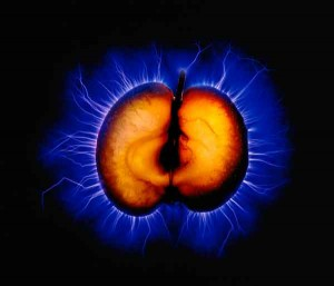 Kirlian Apple Photograph