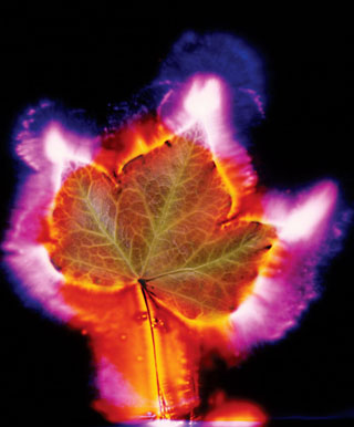 Kirlian Leaf Photograph